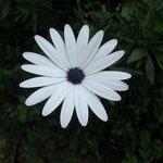 Flower in house garden