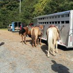 Getting ready for the trail ride