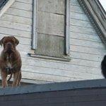 Те самые собаки