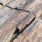Petrified wood and bark