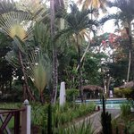 un beau jardin tropical autour de la piscine