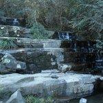 Hogsback Arboretum