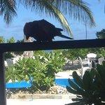 my breakfast-buddy on Island Cottage