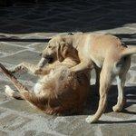 Maxi and Simba