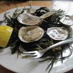 oysters on seaweed