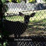 Deer at Zoo