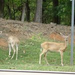 Family of deer welcoming you to Park