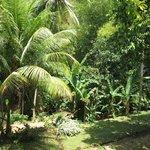 beau coin de jungle