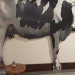 Mr. Peabody Pembroke milks a cow.
