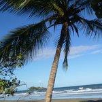 Thornton Beach palm