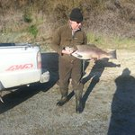 A 42-pound Brown trout that did not get away.
