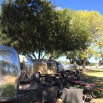 Airstreams under the trees