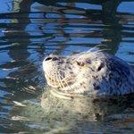 View of Seals, Tides Wharf & Restaurant, Bodega Bay, Ca