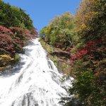 観瀑台から、滝中の木が赤く色づいてます