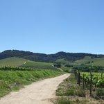 Views of the Stellenbosch Valley