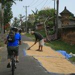 Riding through village at Rice drying season.