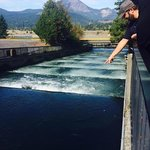 Fish ladder @ Bonneville Lock and Damn