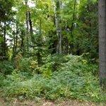 The surrounding inviting woods
