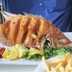 Una de sus delicias, el hogfish!!!!!!!!!!