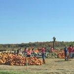 Piles of pumpkins and squash