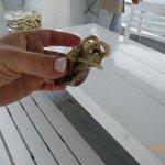 осьминожек