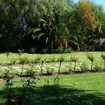 Hlangana Lodge - Gardens