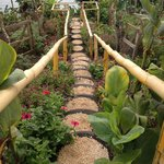 Pathway through the vegetable garden