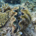 never thought i would get up close to giant clams!