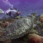 Sea Turtle and Me- Drift Dive
