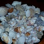 Shells my boys and I found on the beach at Mitchell's Sandcastle