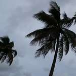 Sitting at Mitchell's Sandcastle looking at the coconut palms