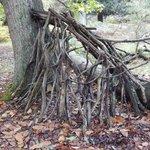 Matley woods