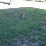 Um esquilo na proximidade. Fazendo pôse