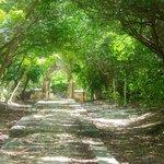 Walk way to stone garden entrance