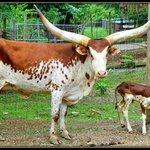 Smoky Mountain Deer Farm & Exotic Petting Zoo