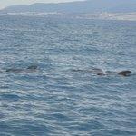Whale Watchin im Wasser
