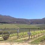 Creations winery, Hermanus