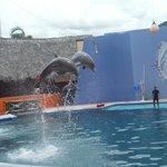 Show con delfines , El Rollo Acapulco
