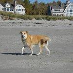 Dusty on Gooch's Beach
