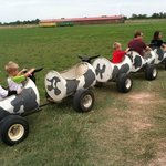 Cow tractor wagon pull