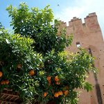 Oranges and The Castle
