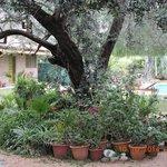 un lindo jardín
