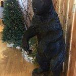 Black bear!
