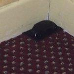 Roach Trap#2