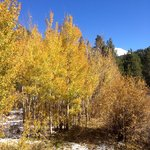 Golden Aspens in October