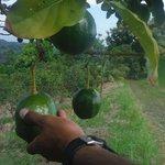 fresh fruit everywhere