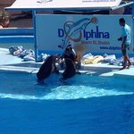 Dolphins having a little snack before their swim with us