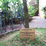 the court yard contains the melaka tree which city is named after