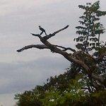 personal toucan - terrace view