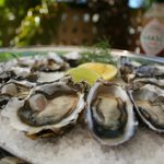 Coffin Bay (SA) Oysters